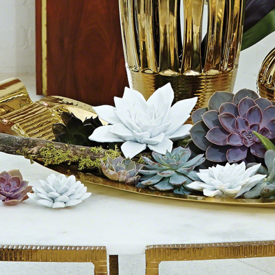 bisque-succulent-white-large-roomshot1