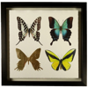butterflies-grouped-front1