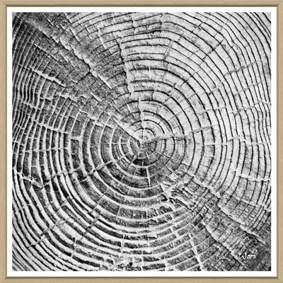 tree-slices-1-front1