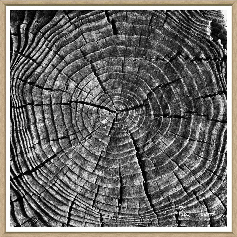 tree-slices-3-front1