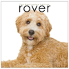 rover-book-front3